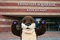 Image: Tennessee Aquarium's Animal Athletes