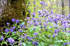 Image: Spring Wildflower Walk